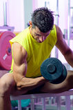 Biceps Curl. Biceps exercise with weights in Gym royalty free stock image