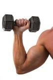 Biceps et haltère Photo stock