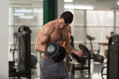 Biceps Exercise With Dumbbell in a Gym. Handsome Hairy Man Working Out Biceps In A Fitness Center Gym - Dumbbell Concentration Curls Stock Photo