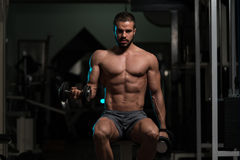 Biceps Exercise With Dumbbells In A Gym. Athlete Working Out Biceps In A Gym On Bench - Dumbbell Concentration Curls Royalty Free Stock Image