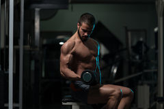 Biceps Exercise With Dumbbells In A Gym. Model Working Out Biceps In A Gym On Bench - Dumbbell Concentration Curls Royalty Free Stock Photography