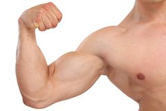 Biceps muscles strength strong power bodybuilder bodybuilding mu. Scular man isolated on a white background Royalty Free Stock Photo