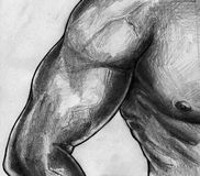 Biceps and torso sketch. Hand drawn pencil sketch of a muscular male torso and arm with well shaped deltoid, biceps and triceps muscles Royalty Free Stock Images