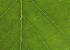 bich liści, Zdjęcia Stock