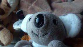 Bicho de pelúcia da coala Foto de Stock