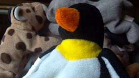 Bicho de pelúcia do pinguim Imagens de Stock Royalty Free