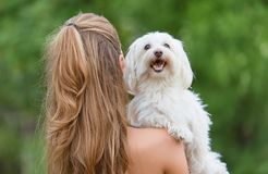 Bichon bolognese dog with beautiful in the park. Bichon bolognese dog with beautiful owner in the park stock photos