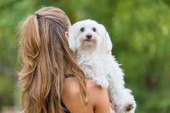 Bichon bolognese dog with beautiful in the park. Bichon bolognese dog with beautiful owner in the park stock photo