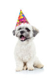 Bichon del cucciolo del partito havanese Fotografia Stock