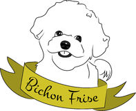 Bichon Frise Stock Photography