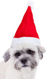 Bichon frise with santa cap. Face of a bichon frise with santa cap over white Stock Images