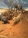 Bichos de pelúcia em Texas foto de stock royalty free
