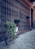Bici con la cesta de la flor al lado de la pared de la calle Imagen de archivo libre de regalías