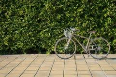 Bici d'annata sul marciapiede con il contesto verde della foglia Immagini Stock Libere da Diritti