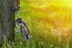 Bici de montaña cerca de un árbol en un claro del bosque en el fondo del gre imagenes de archivo