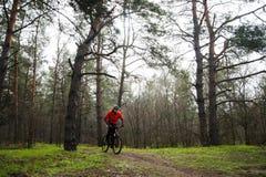 Bici de montaña del montar a caballo del ciclista en la niebla en el rastro en el pino hermoso Forest Adventure y el concepto del Imagen de archivo libre de regalías