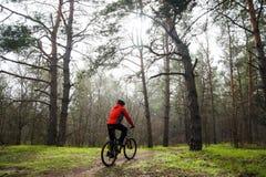 Bici de montaña del montar a caballo del ciclista en la niebla en el rastro en el pino hermoso Forest Adventure y el concepto del Fotografía de archivo libre de regalías