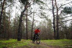 Bici de montaña del montar a caballo del ciclista en la niebla en el rastro en el pino hermoso Forest Adventure y el concepto del Foto de archivo