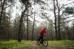 Bici de montaña del montar a caballo del ciclista en la niebla en el rastro en el pino hermoso Forest Adventure y el concepto del Imágenes de archivo libres de regalías