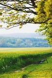 Bici de montaña que pone cerca del campo o del prado foto de archivo libre de regalías