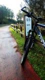 Bici del Greenway Immagini Stock