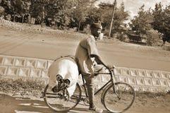 Bici del uso del Masai para el transporte Foto de archivo