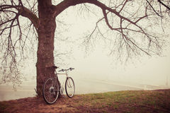 Bici del vintage cerca del árbol en niebla Imagenes de archivo
