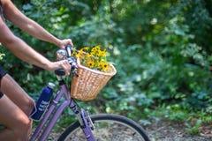 Bici di guida della donna sulla traccia in foresta fotografia stock