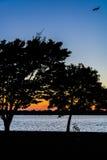 Bici di tramonto Fotografia Stock