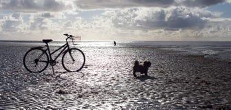 Bici e cane dell'uomo Fotografia Stock