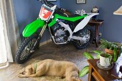 Bici e cane della sporcizia Fotografia Stock Libera da Diritti