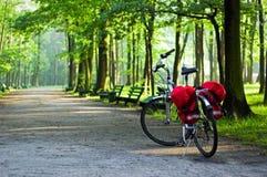 Bici en un bosque Imagen de archivo libre de regalías