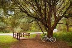 Bici hermosa cerca del árbol Imágenes de archivo libres de regalías