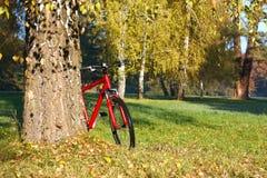 Bici roja que se coloca cerca de un abedul grande del tronco Imagen de archivo
