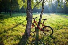 Bici roja que se coloca cerca de un tronco del abedul en un parque soleado de la primavera Foto de archivo