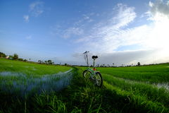 Bici verde en el campo de maíz Fotos de archivo libres de regalías