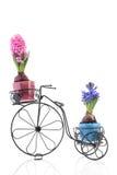 Bici vieja con los jacintos coloridos Imagen de archivo libre de regalías