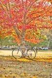 Bici y árbol Fotografía de archivo libre de regalías