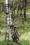 Bici y abedul foto de archivo libre de regalías