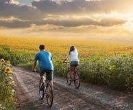Bicicleta adolescente da equitação dos pares no campo do girassol fotos de stock royalty free