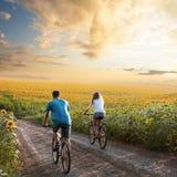 Bicicleta adolescente da equitação dos pares no campo do girassol imagem de stock