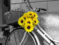 Bicicleta adornada con los girasoles Foto blanco y negro de Pekín, China Foto de archivo libre de regalías