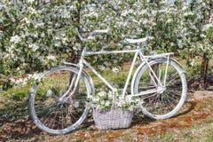 A bicicleta branca bonita está no jardim luxúria da maçã com uma cesta das flores Fotografia de Stock