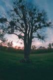 Bicicleta cerca de un árbol Foto de archivo libre de regalías