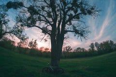 Bicicleta cerca de un árbol Fotografía de archivo libre de regalías