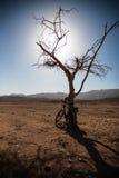 Bicicleta cerca de un árbol seco Foto de archivo