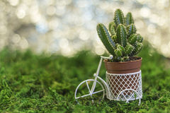 Bicicleta com plantas carnudas Imagem de Stock Royalty Free