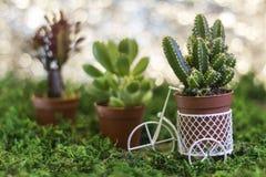Bicicleta com plantas carnudas Foto de Stock