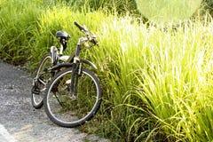 Bicicleta com prado verde. Foto de Stock