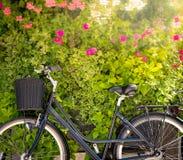 Bicicleta con la pared verde de la flor en fondo Fotos de archivo